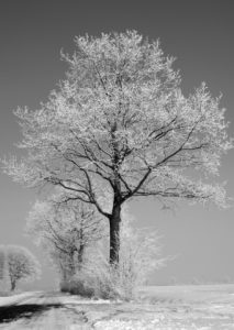 winterboom-landschap