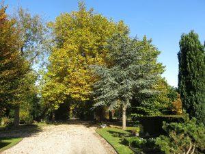 foto-een-wandeling-door-het-arboretum